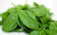 12 loại thực phẩm không nên cất vào tủ lạnh