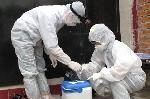 Công bố hết dịch cúm H5N1 trên chim yến