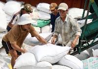 Chưa phát hiện gạo có chất gây ung thư