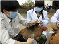 H7N9 dễ lây từ người sang người nhất