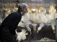 Lần đầu tiên H7N9 lây từ người sang người