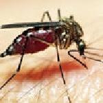 Nguy cơ lây bệnh từ côn trùng trong nhà