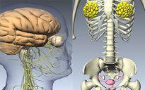 Tìm hiểu chức năng của các hệ thống bên trong cơ thể con người
